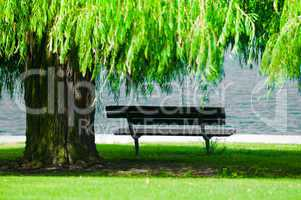 Park Bench with Weeping Willow