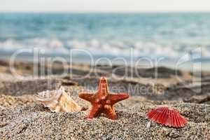 Starfish and seashell on sea sand beach