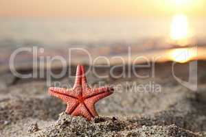 Starfish on sea sand beach