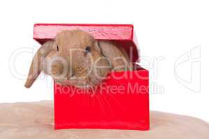 rabbit in a box