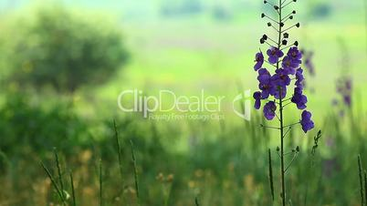 green grass and spring flowers