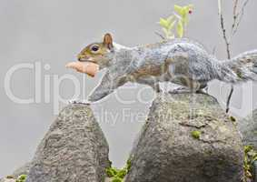squirrel with bread at wall