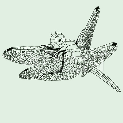 dragonfly  drawing , vector.