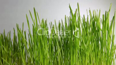 Grass in the wind on the gray background
