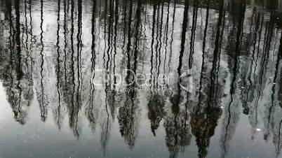 Forest reflection in water,ripple.
