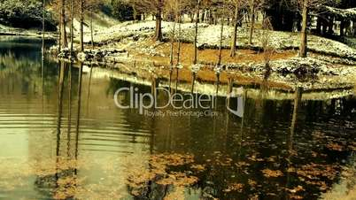 Forest reflection in water,metasequoia leave floating on lake,ripple,snow.
