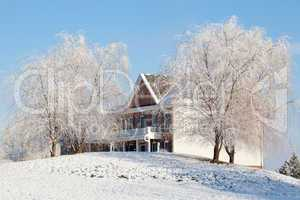 Weeping willows frame modern house