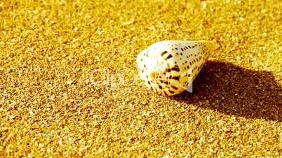 conch on golden sandy beach,wind blow sand