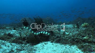 Wasserschlangen
