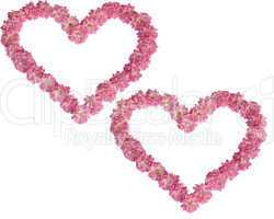 Two hearts from pink roses on a white background