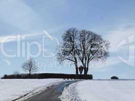 Kastanie im Winter (Aesculus hippocastanum), Bad Iburg-Glane, Osnabrücker Land, Niedersachsen - Chestnut in winter (Aesculus hippocastanum), Bad Iburg-Glane, Osnabruecker Land, Lower Saxony