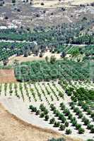 Agriculture in the slopes of Cretan mountains.