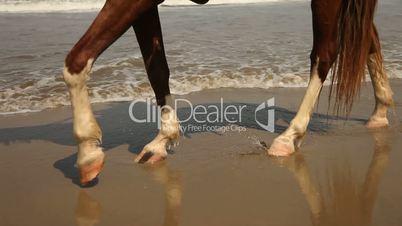 Pferd, Strand