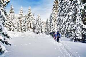 Snowshoe Hiking through Forest