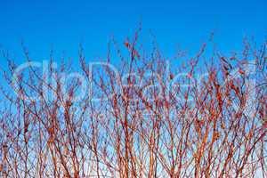 High dried grassy plants