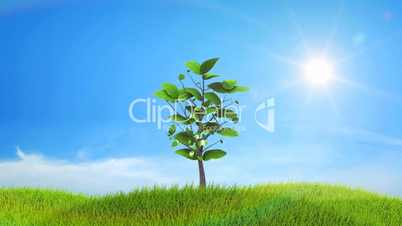Growing up tree animated background. HD.
