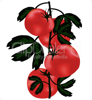 Ripe tomatoes on bush