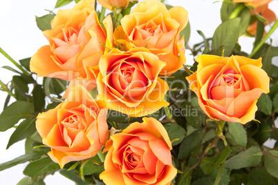 Wunderschöner Strauß Rosen