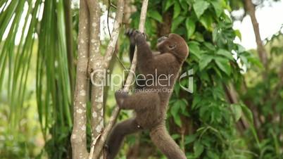 Affe klettert auf Baum