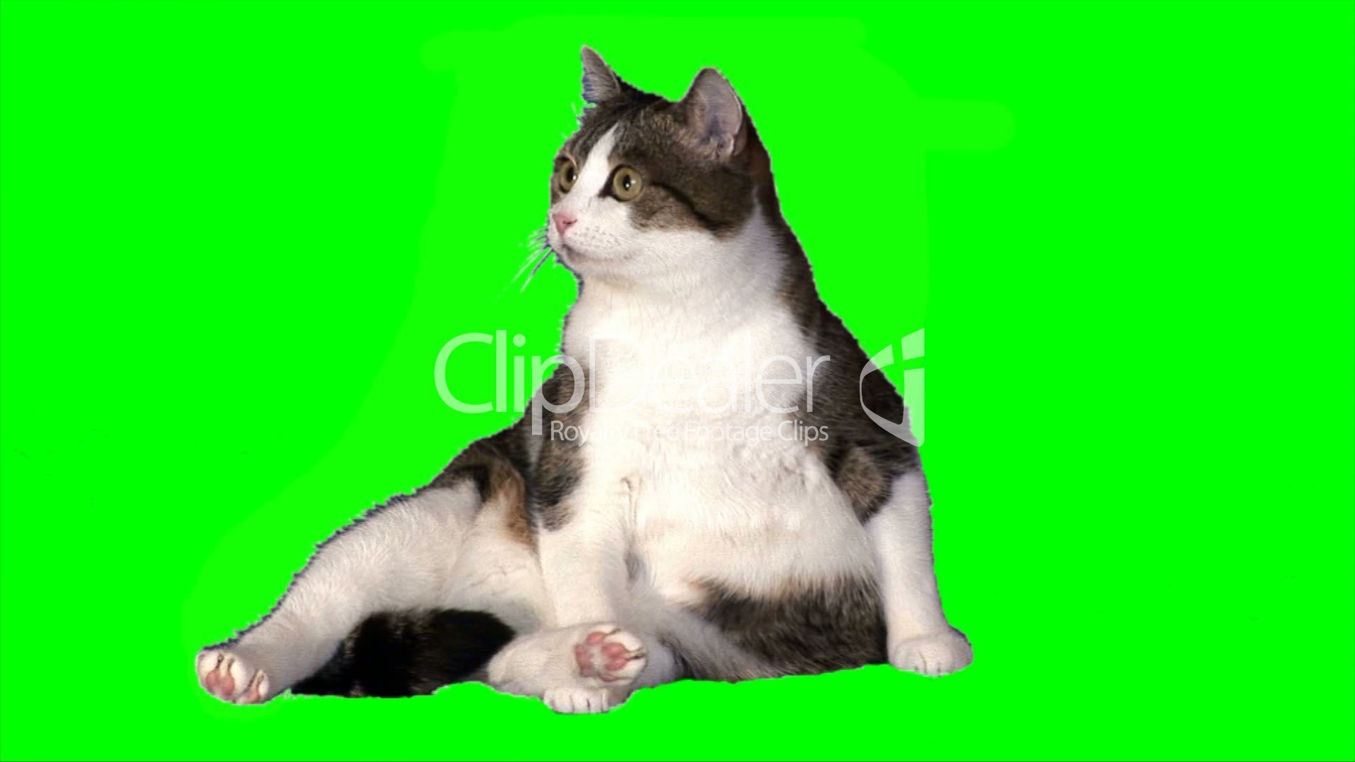 Funny Cat Sits Lizenzfreie Stock Videos Und Clips