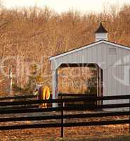 Horse in paddock by stable at sunset
