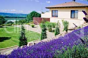 Lavender Field in Garden