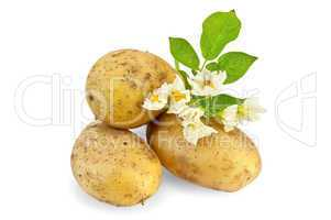 Potato yellow with a flower