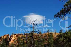Tree and Cloud, Bryce Canyon, Utah
