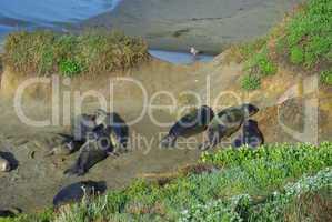 Sea Lions and Seagull, Pacific Coast, California