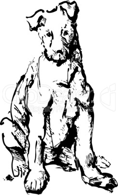ink sketch of dog - young terrier (black and white picture)