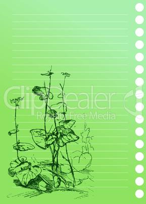 sketch of burdock plant in artist`s notebook