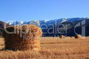Hay roll in the field