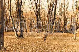 Autumn forest. Sepia