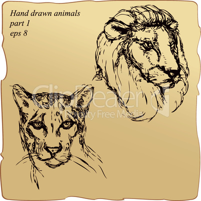 hand drawn ink portrait sketch of lion and cheetah heads