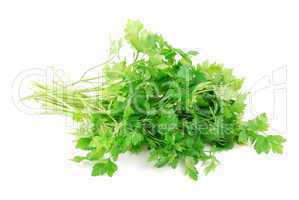Bouquet of parsley on white