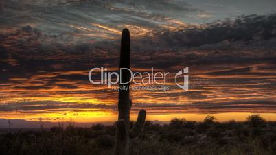 HDR Timelapse Sunset Arizona Cactus