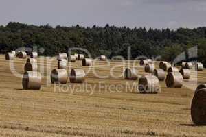 Ostercappeln, Mönkehöfen, abgeerntetes Feld mit Strohballen, Rundballen auf einem Feld in Niedersachsen