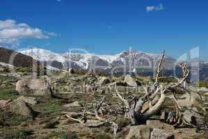 Dry tree, boulders, forest and high Rocky Mountain peaks, Colorado