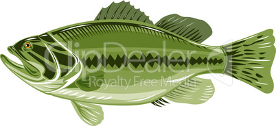 bass largemouth side colour retro