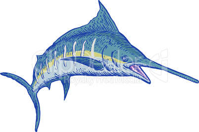 blue marlin front sketch retro