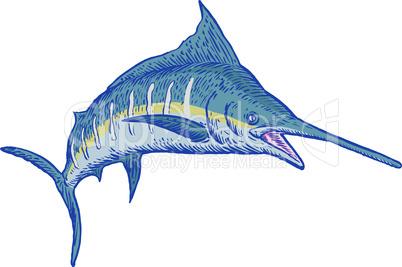 blue marlin front sketch retro