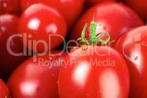 Nahaufnahme von frischen Roma Tomaten mit Wassertropfen bedeckt