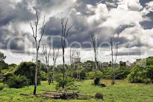 Dry Trees on Swamp