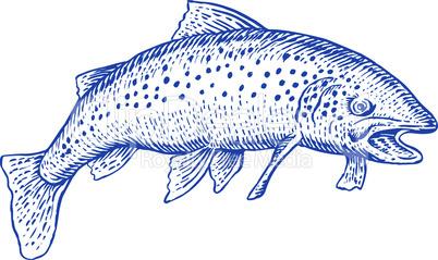 trout side etching style retro