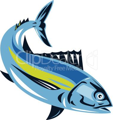 tuna albacore diving retro