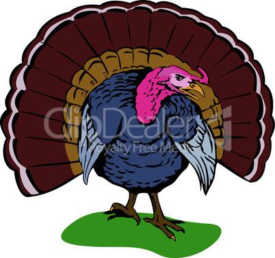 turkey front on view retro