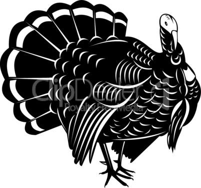 turkey frontisort retro