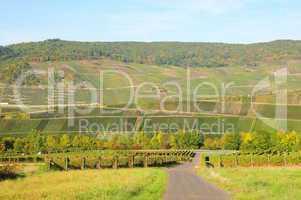 Weinlandschaft an der Mosel