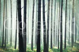 Mystic bright forest