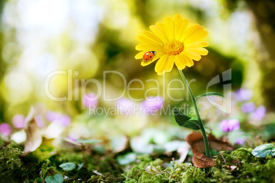 flower on nature background